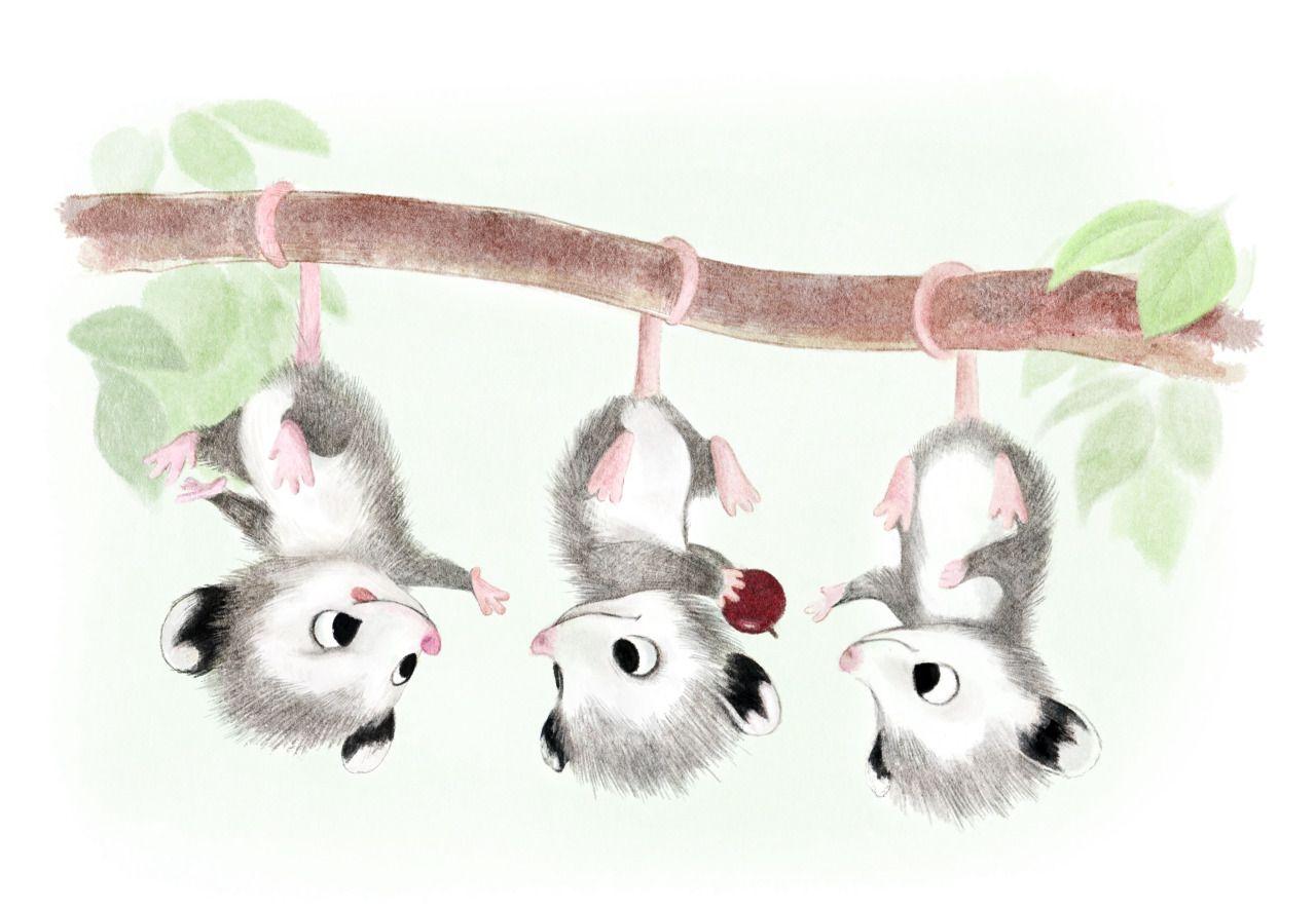 Syd's Illustrations : Baby Possums!   Kawaii   Pinterest ...