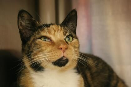 Damsel has been adopted from Seattle Humane http//www