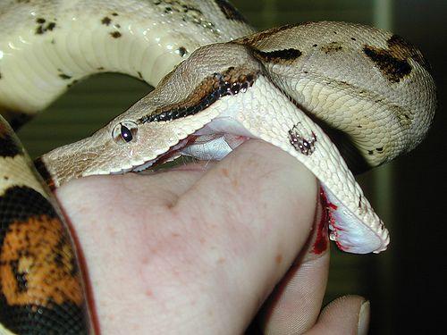 How To Avoid Treat A Snake Bite Snake Bites Snake Art Of