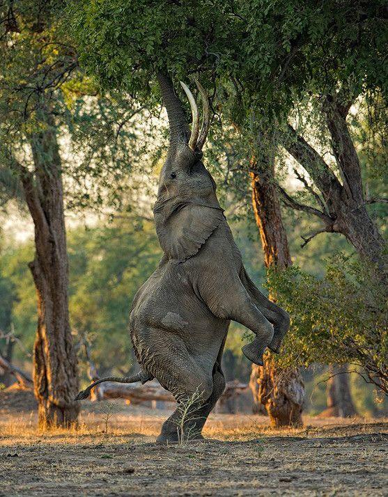 Pin Von Kathryn Kuizin Auf Elephants Tiere Tiere Schon Und