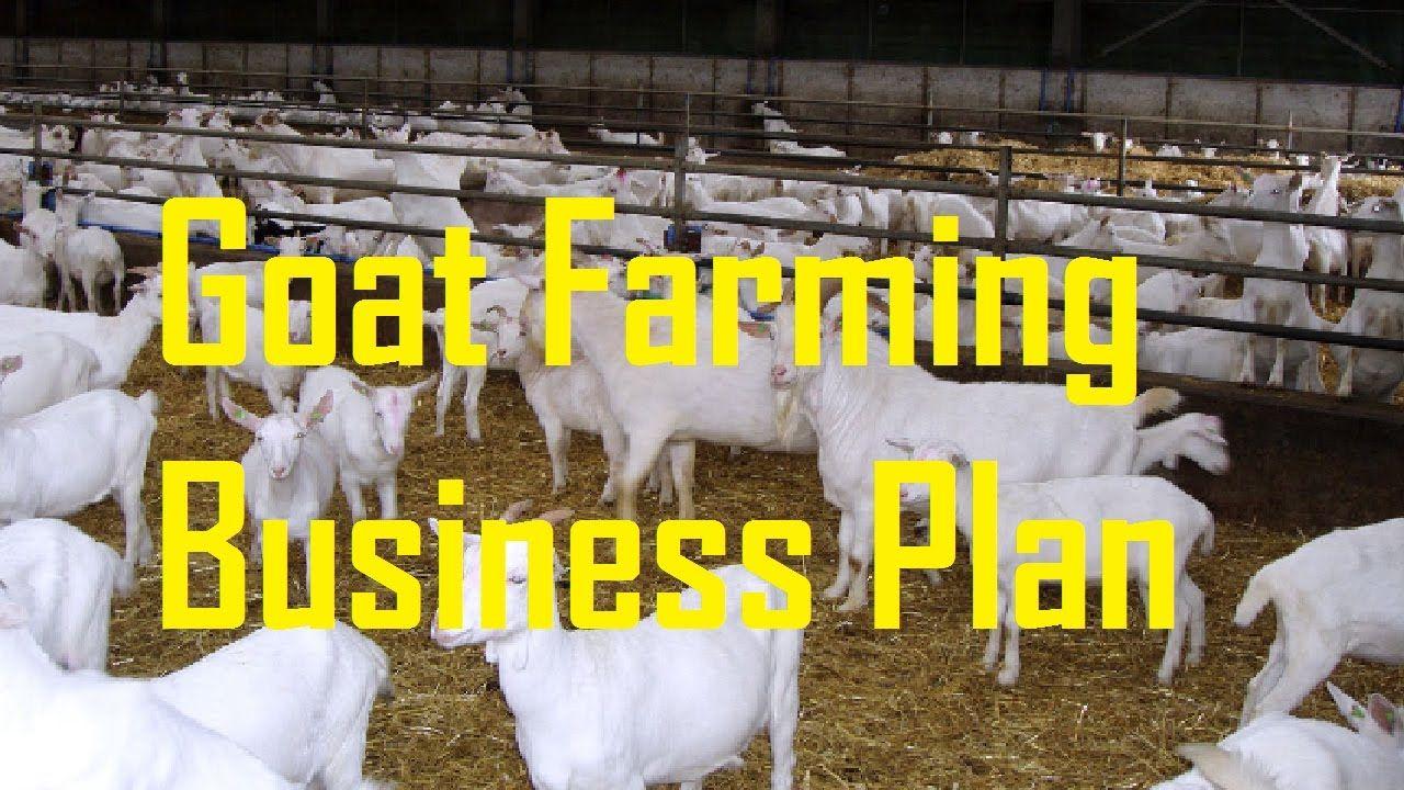 Starting a Goat Farm Goat Farming Business Plan Goat