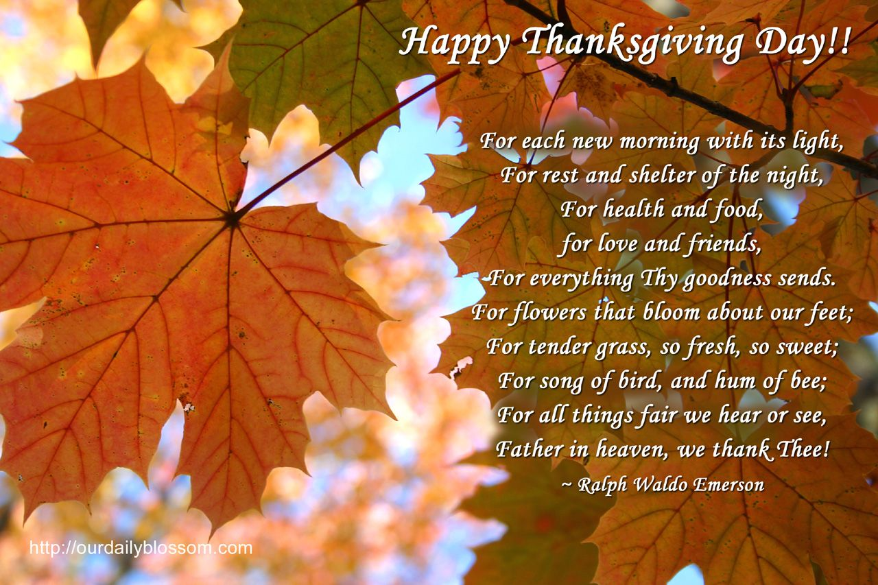 Perfect Happy Thanksgiving Day Quotes