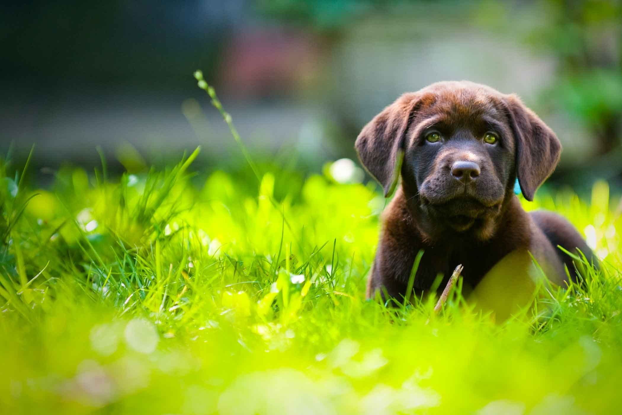 How To Train Your Dog To Stay In An Unfenced Yard Training Your