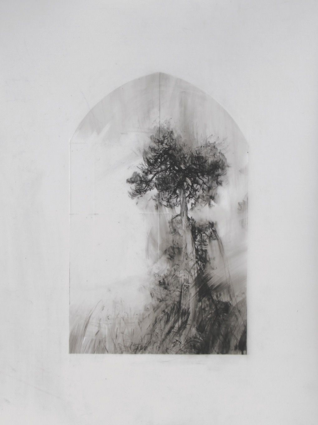 Laurie Steen | 'Pines I', conte on mylar | Drawing