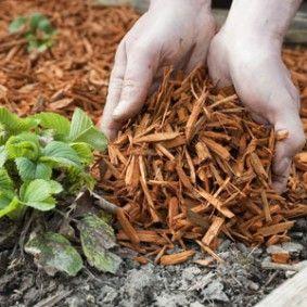 Choisir le bon paillis pour couvrir le sol du jardin