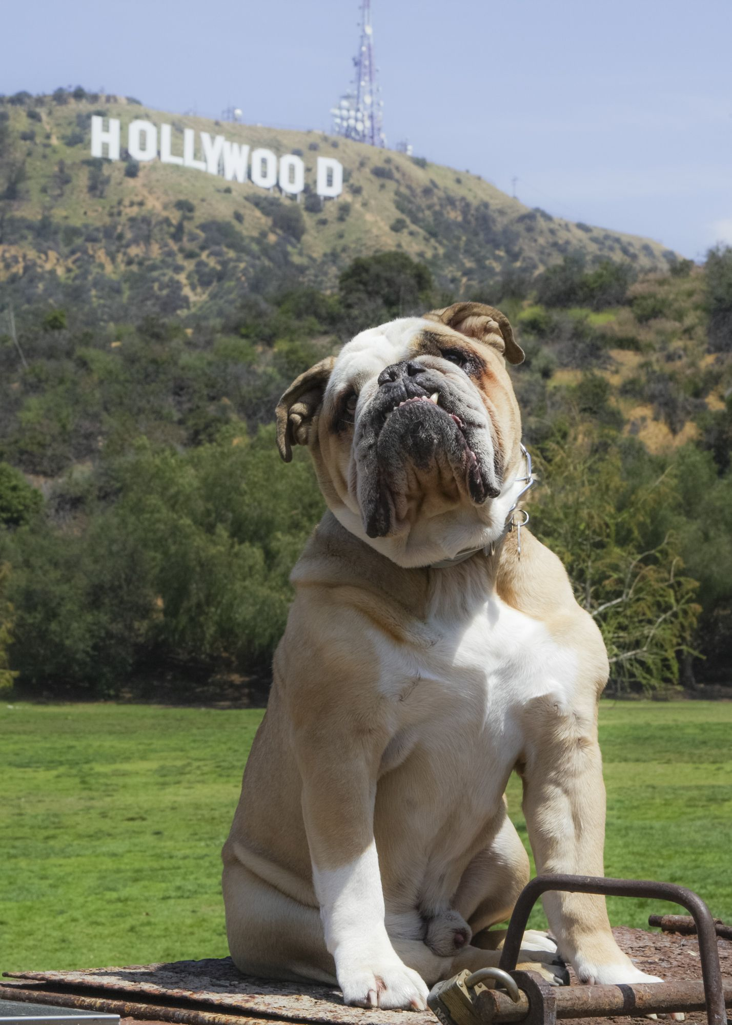 Harley And The Hollywood Sign Rawco California Roadtrip