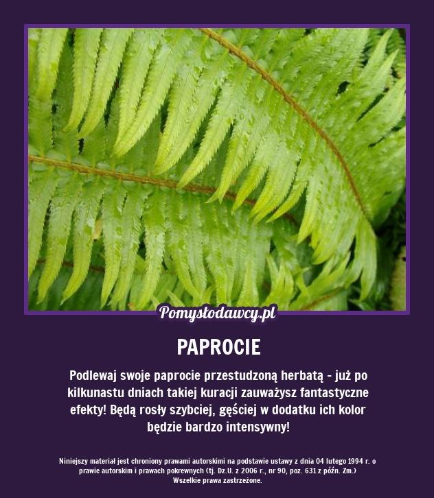 Prosty Sposob Na Piekne Paprocie Plants Planting Flowers Gardening Tips