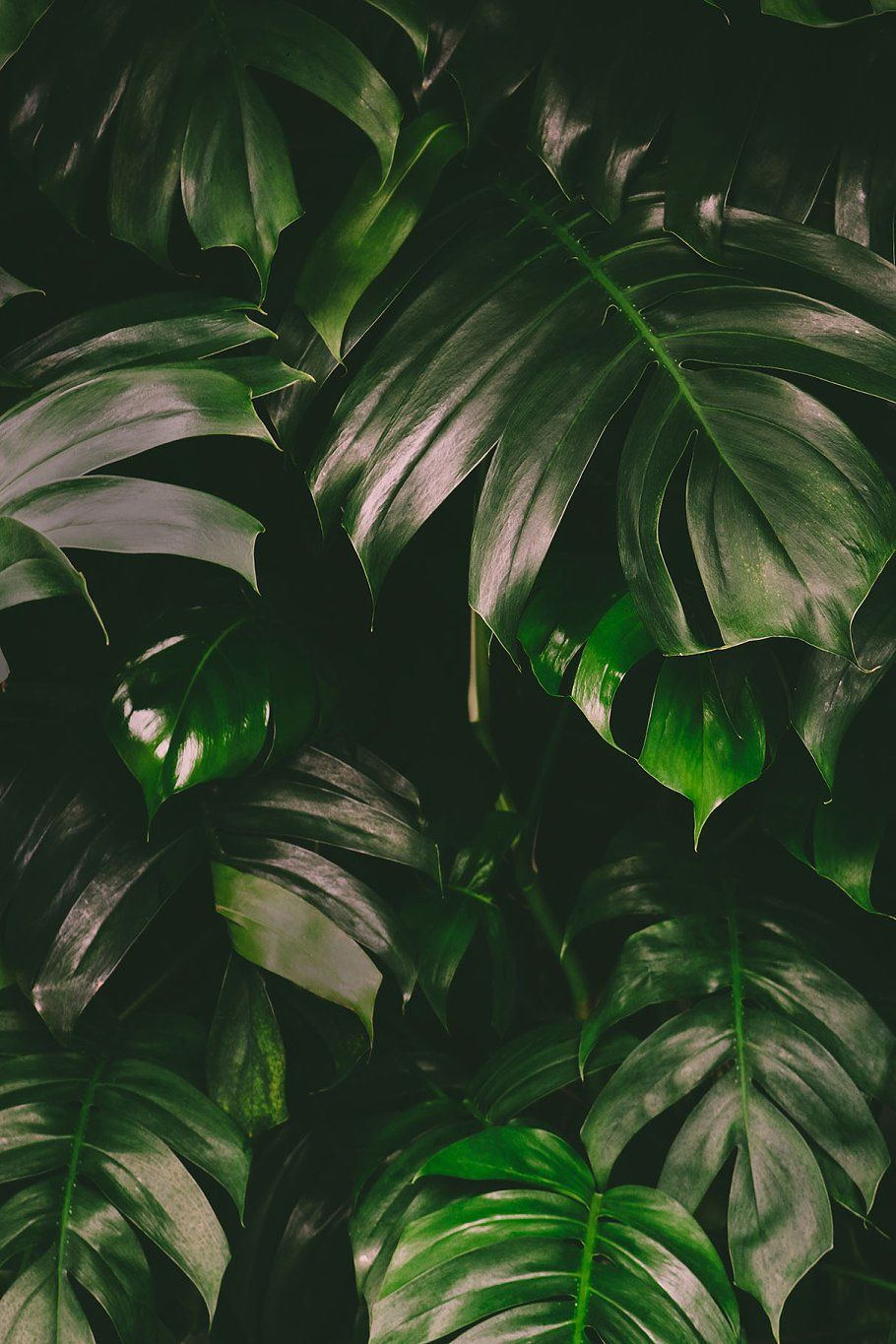 Monstera Leaves Jungle Background By Annakaroline In 2019