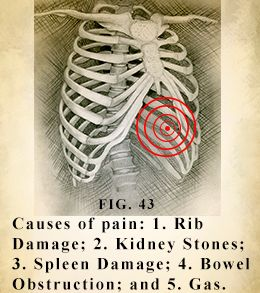 Left Side Pain Under Ribs | Ribs, Lower backs and Pain d'epices