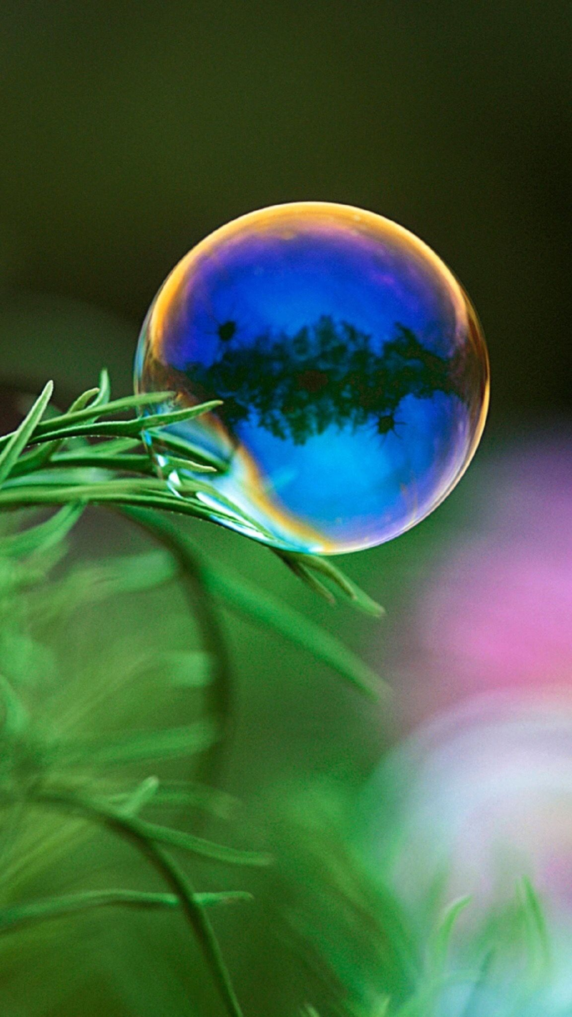 Soap Bubble And Green Leaf Wallpaper