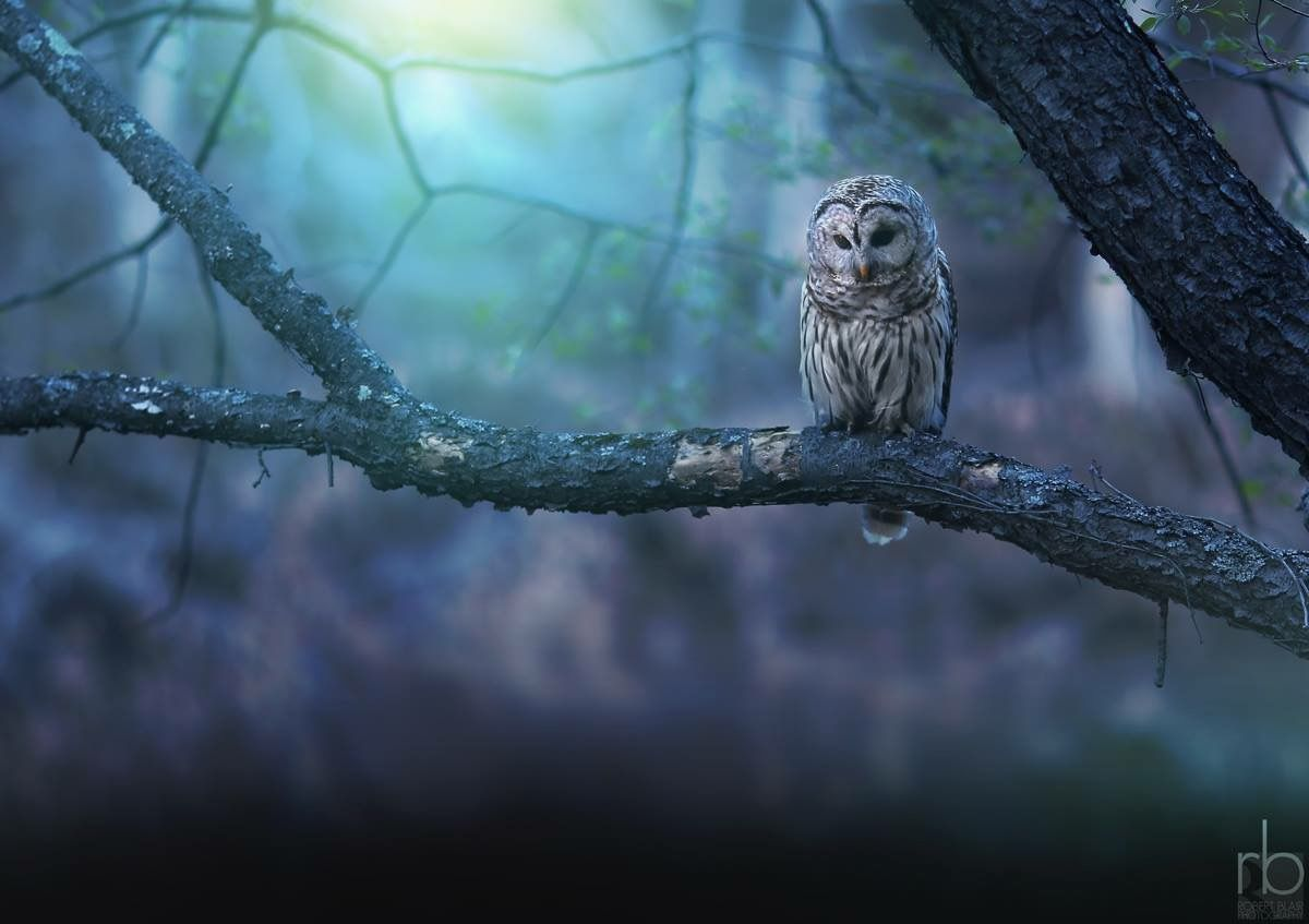 Pin by Sonja Costello on Natures Beauty Owl, Animals