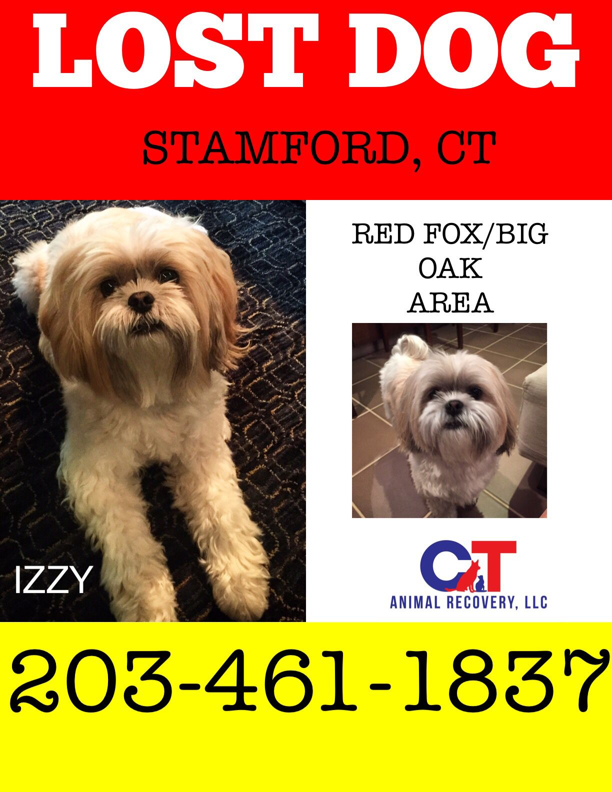 Missing In Stamford Losing A Dog Pets Stamford