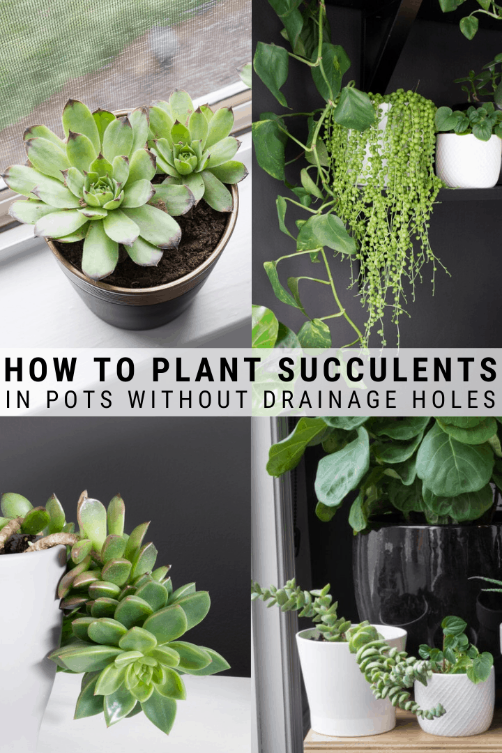 How To Plant Succulents In Pots Without Drainage Holes Plants Succulents In Containers Succulents