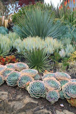 Gentil Love The Big Flower Type Succulent In The Front Great Garden Design By  David Feix. Perfect Outside Succulent Garden For Summers Like Last Year.