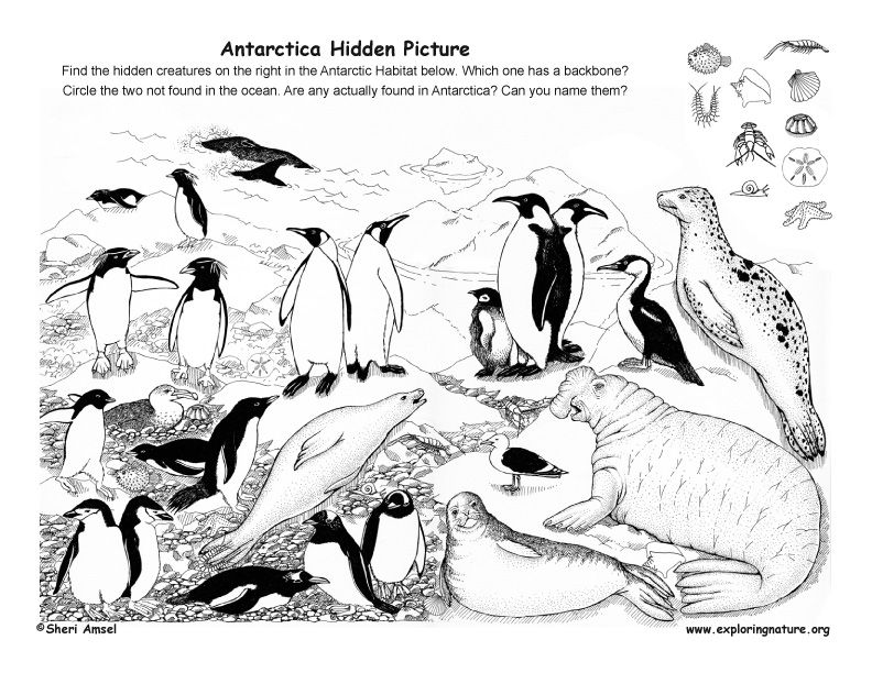 Antarctica Hidden Picture Http Www Exploringnature Org