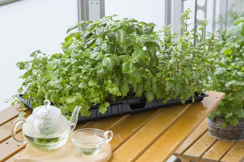 プランター不要 家庭菜園ビギナーに話題の セルトレイ栽培 って知っ