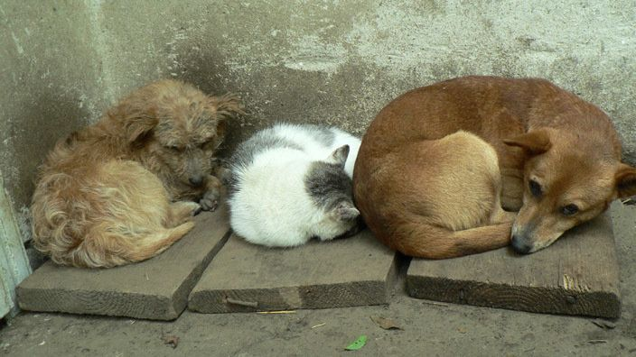 Russia. Against the killing of animals, forbid the Velgotskaya activities in the Chelyabinsk region