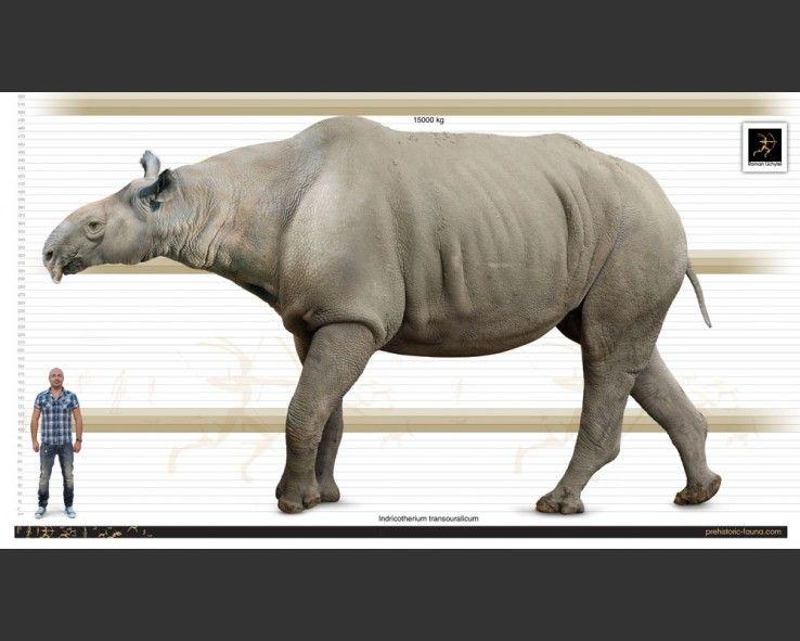 Indricotherium | Prehistoric wildlife, Prehistoric ...