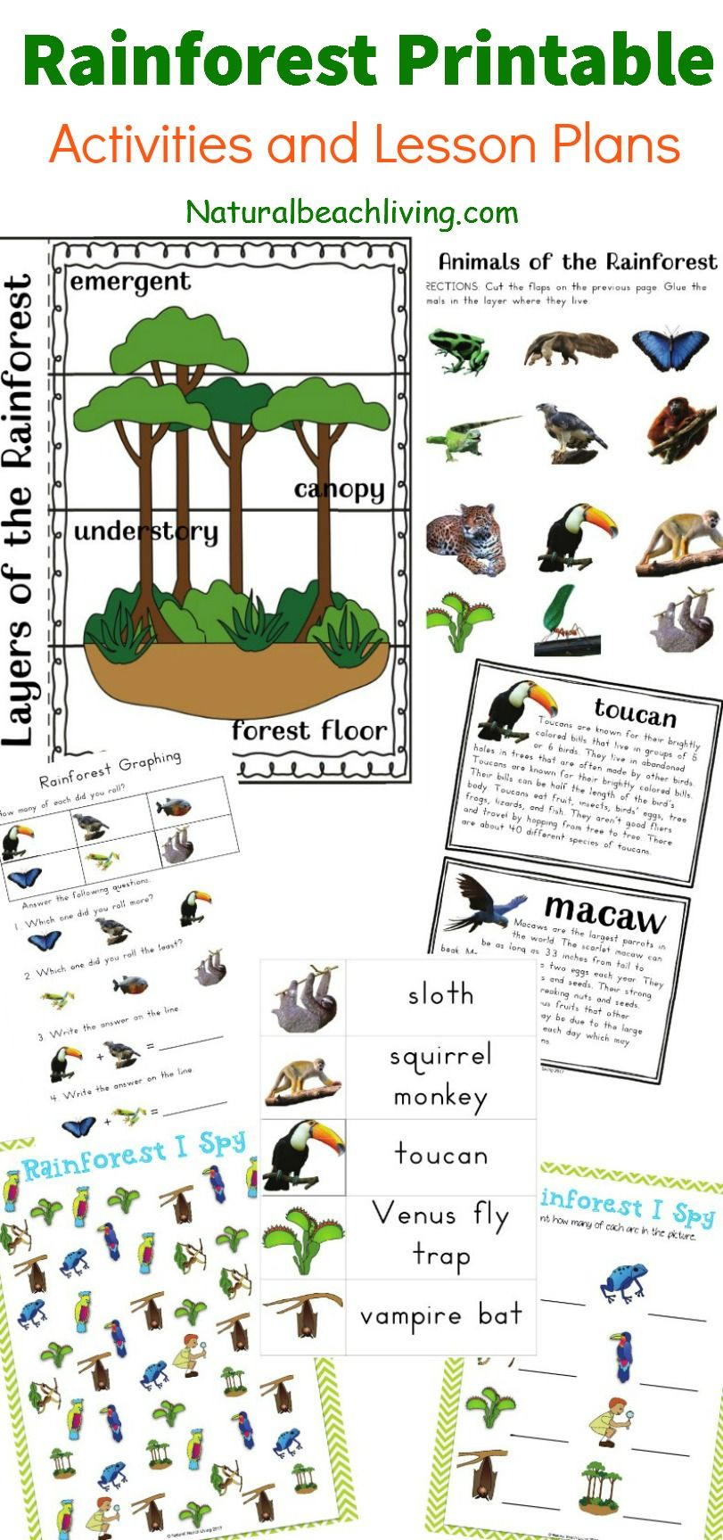 The Best Rainforest Printable Activities for Kids | Pinterest ...