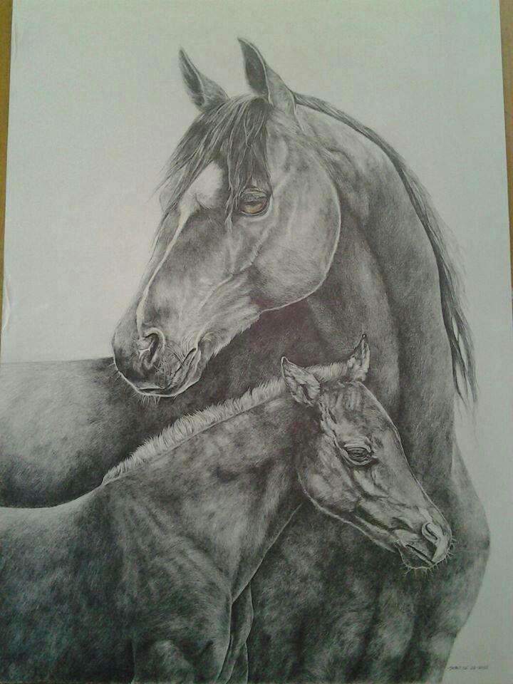 Mom n baby | Horse drawings, Horse sketch, Baby horses