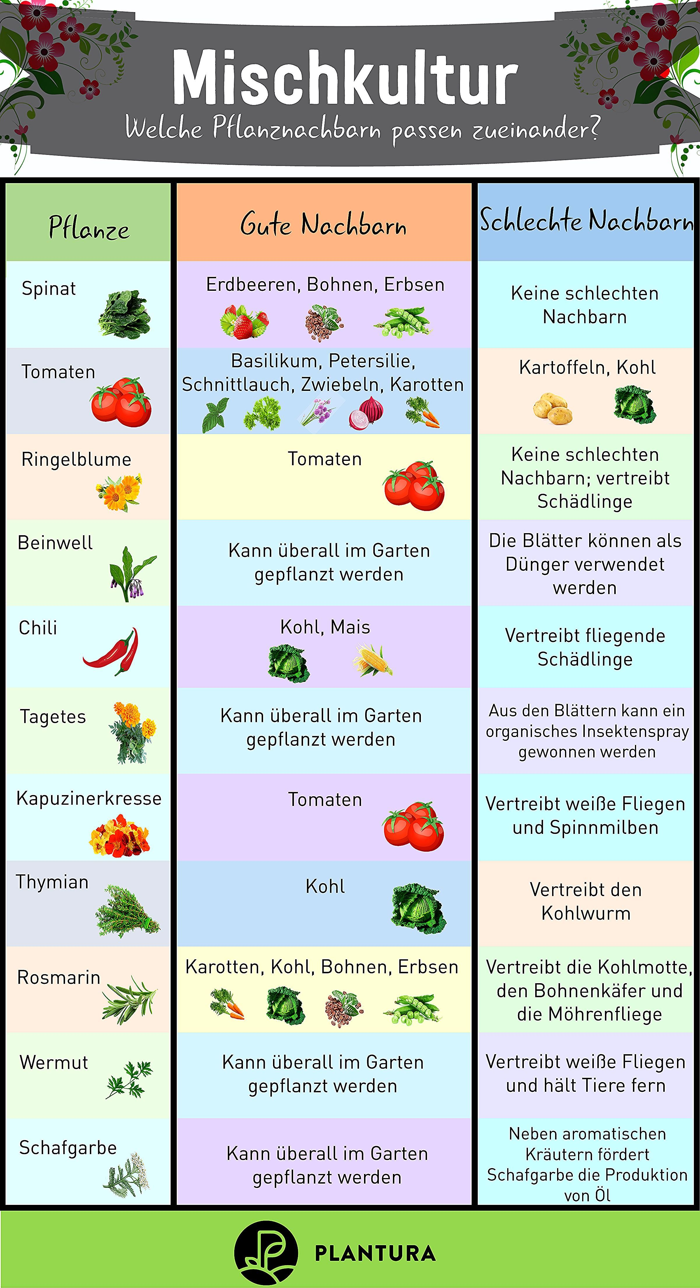 Photo of Mixed culture: which plants fit together? Not every plant is compatible …