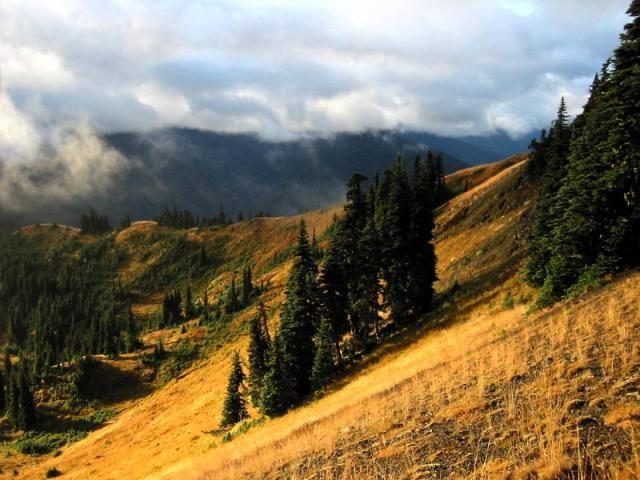 Golden Ridge. Olympia National Park, WA.
