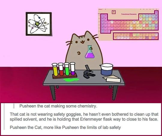 a cat doing chemistry chemistry pusheen and funny images