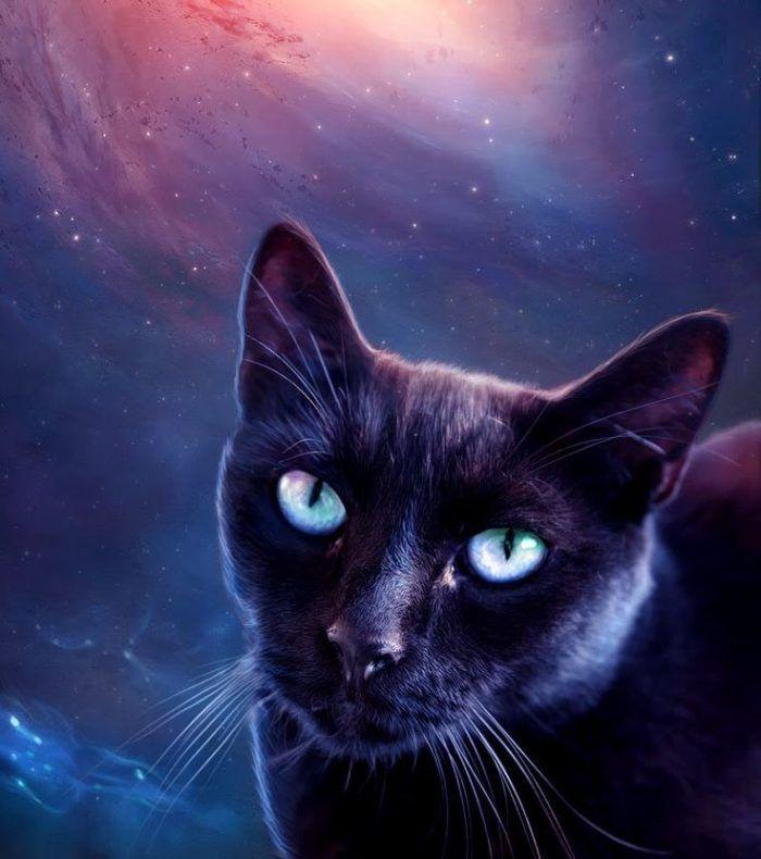 Black Cat Totem Tracing The Origins Of The Black Cat Spiritual