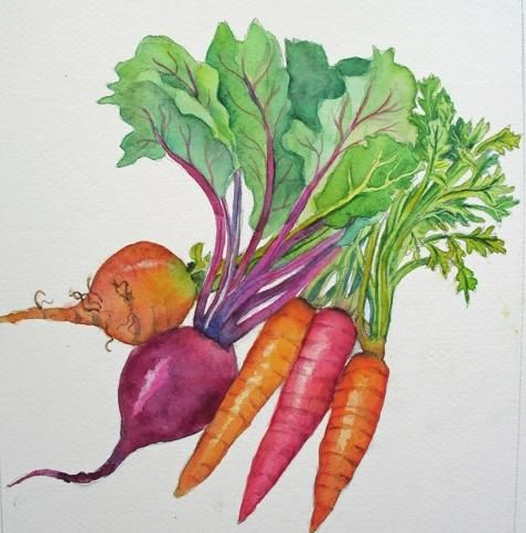 Root vegetable watercolor by Lesta Frank. great for the kitchen