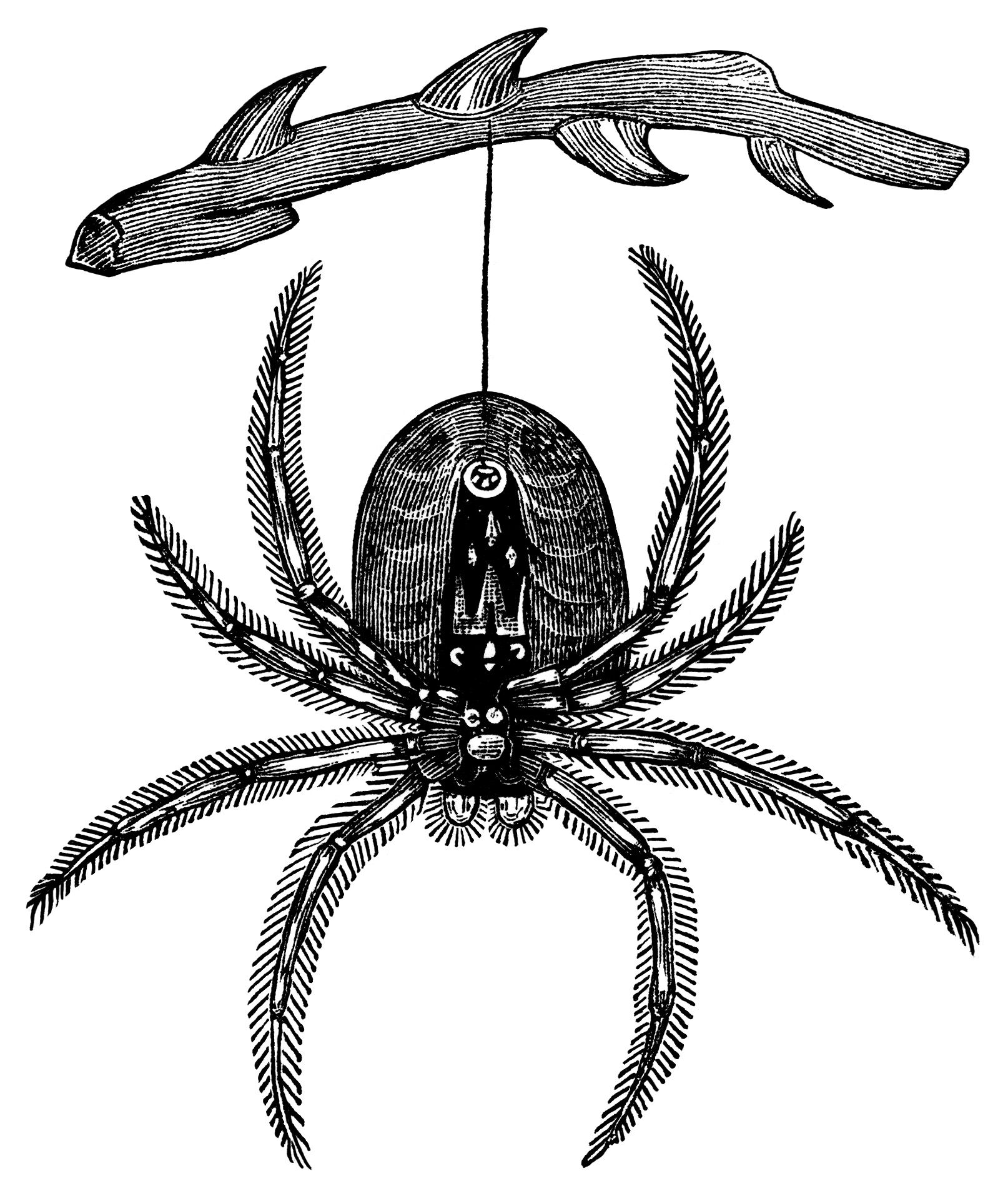 Hanging Spider ~ Free Vintage Halloween Clip Art (black and white ...