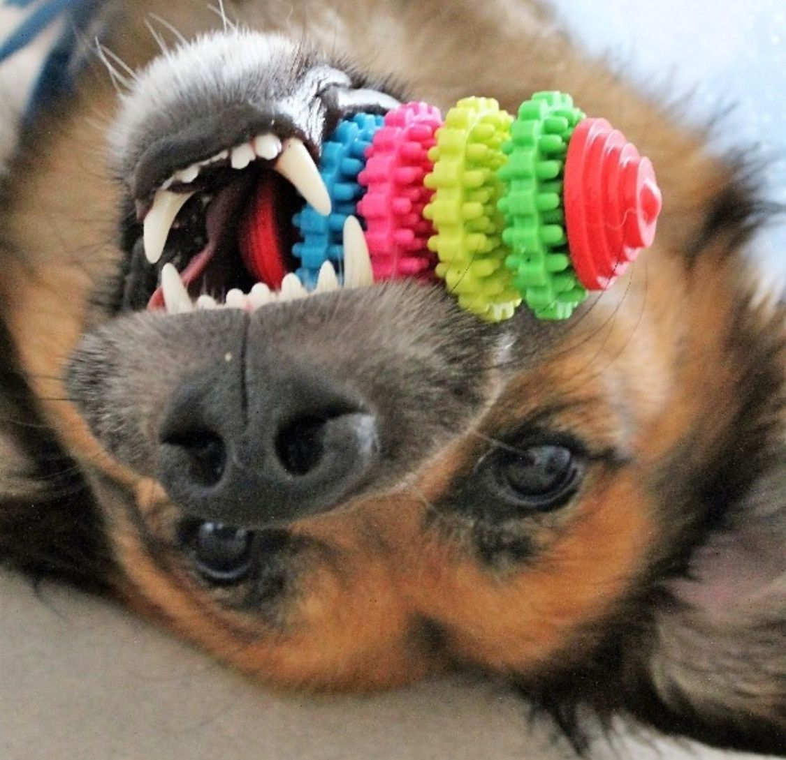 Paw Prime's Teeth Cleaning Toy | Coconut oil for dogs ...