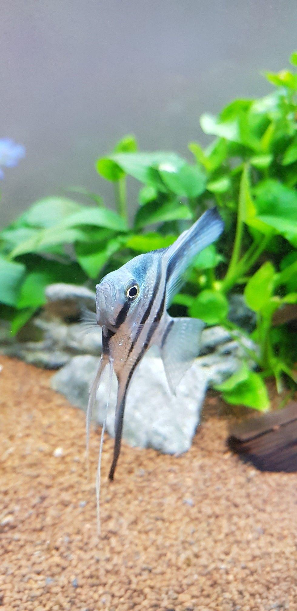 Manfish Hewan Ikan