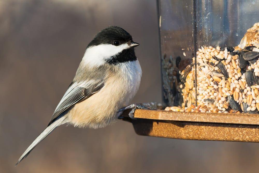 Bird Feeding Tips for the Backyard Birder | Bird feeders ...