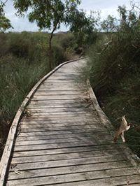 #PointCookCoastalPark and #CheethamWetlands #SpectacleLake #BirdWatching