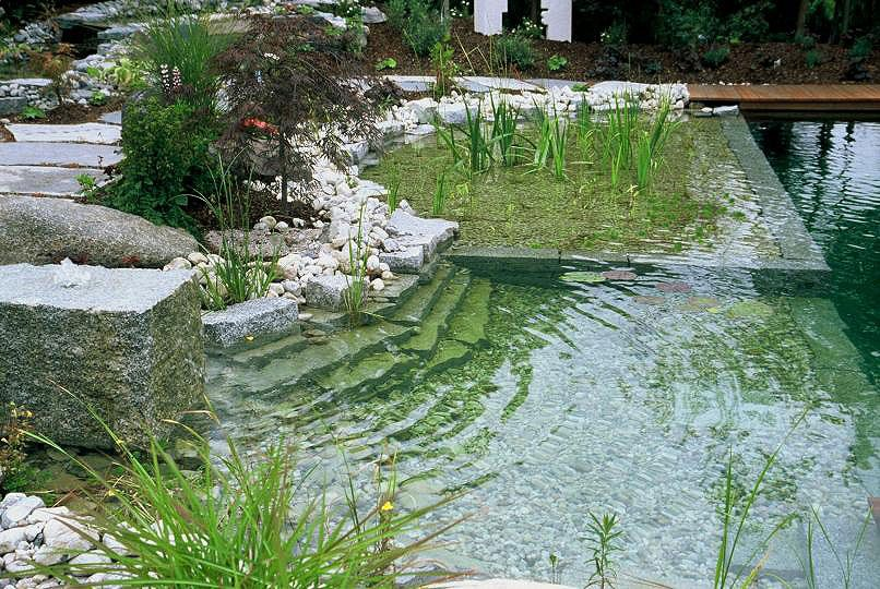 pretty natural swimming pools with natural swimming pools for - Natural Swimming Pool Designs