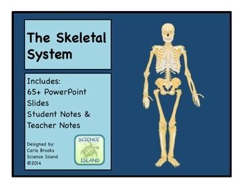 Skeletal System PowerPoint Lesson and Notes - Anatomy