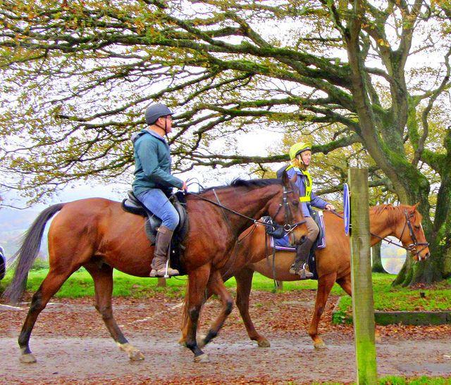 Just passing  through .. beautiful  Horses - Newlands Corner ,, | by John(cardwellpix)