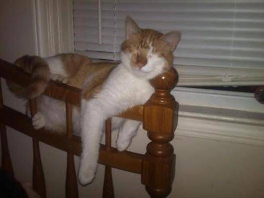Napping For A Cat Is Possible Any Where Lol !