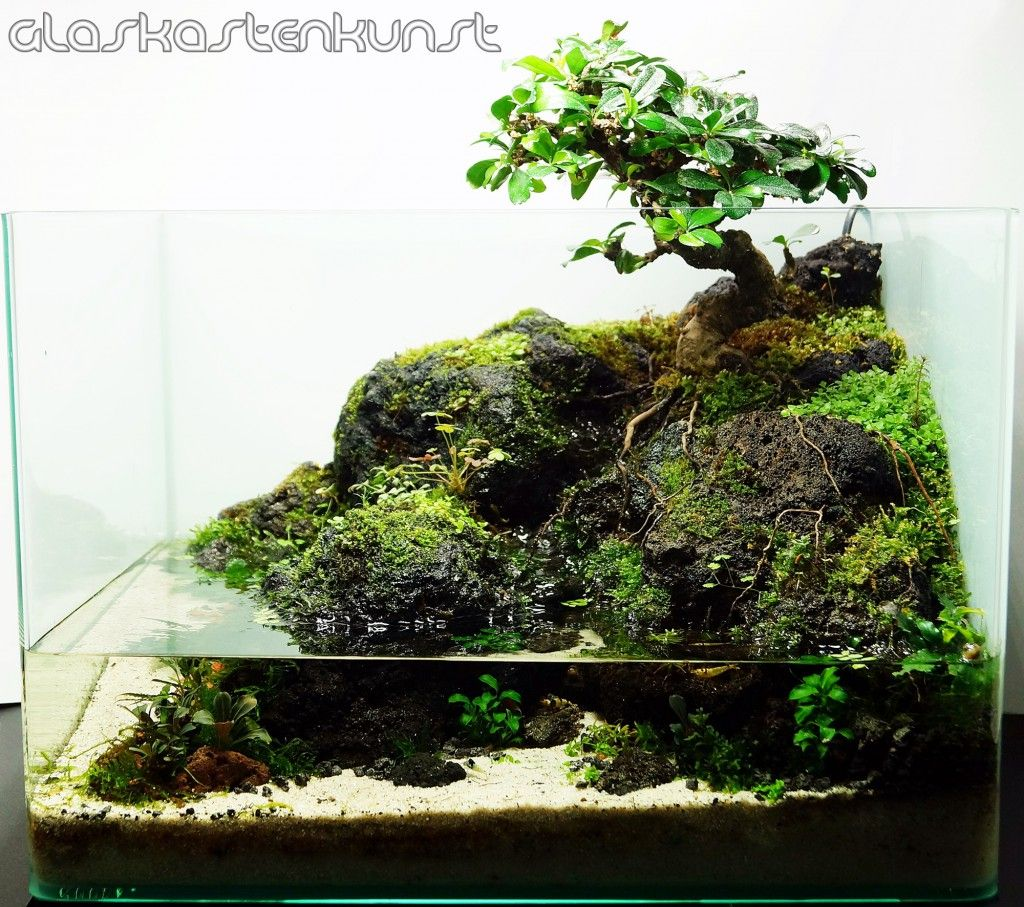 Calm Carmona Pflanzen Wasser Terrarium Aquarien
