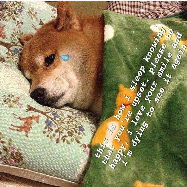 Pin by Bambi peaches on ᴍᴇᴍᴇ's ☹ Cute love memes, Love