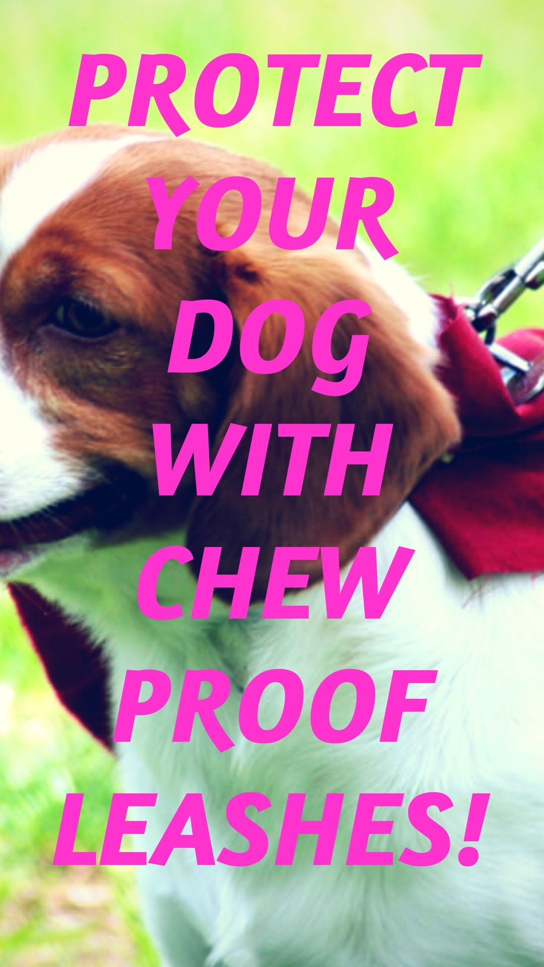 These are the 3 best chewproof dog leashes Dog leash