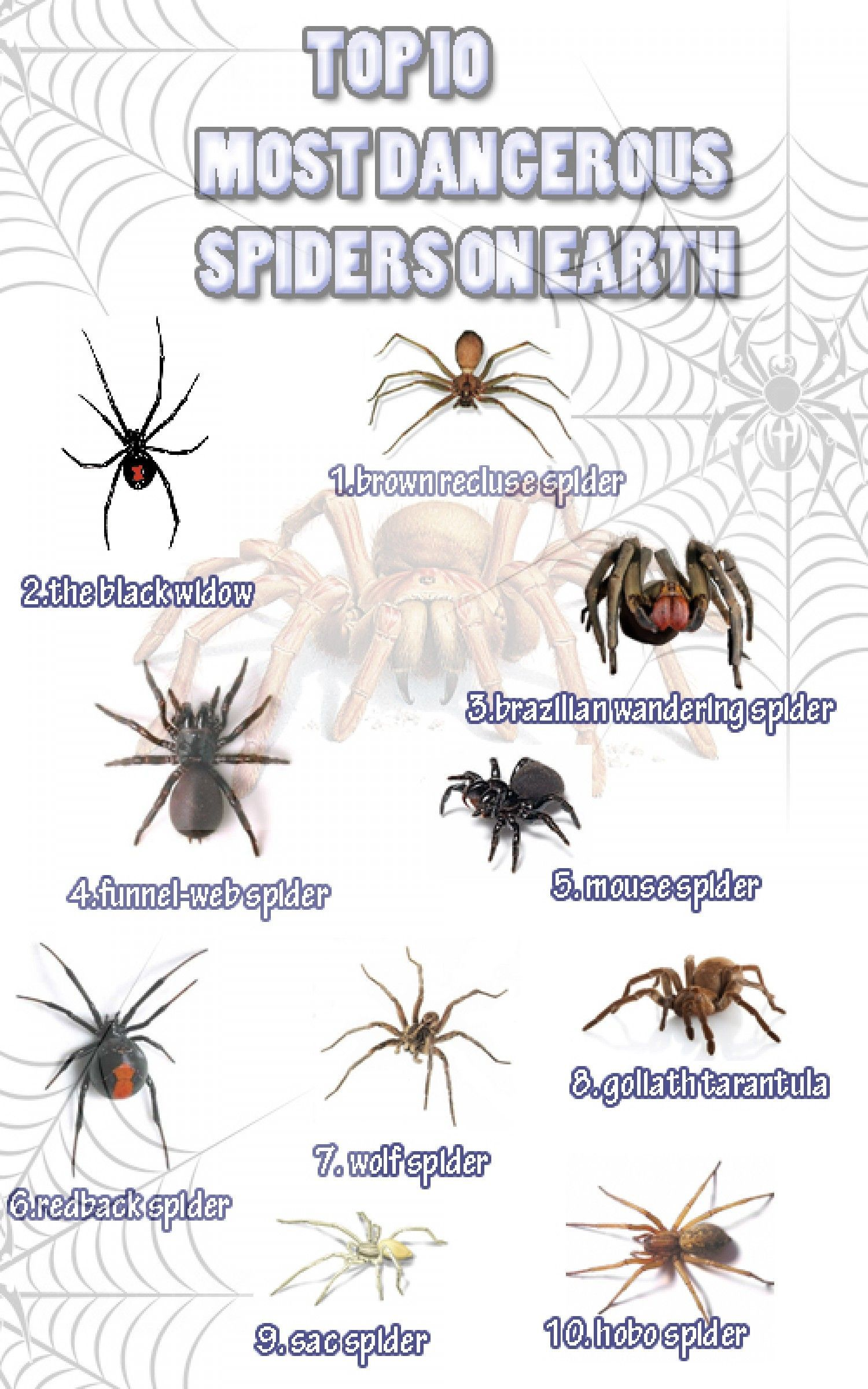 Top 10 Most Dangerous Spiders On Earth Infographic #Spiders | Other ...