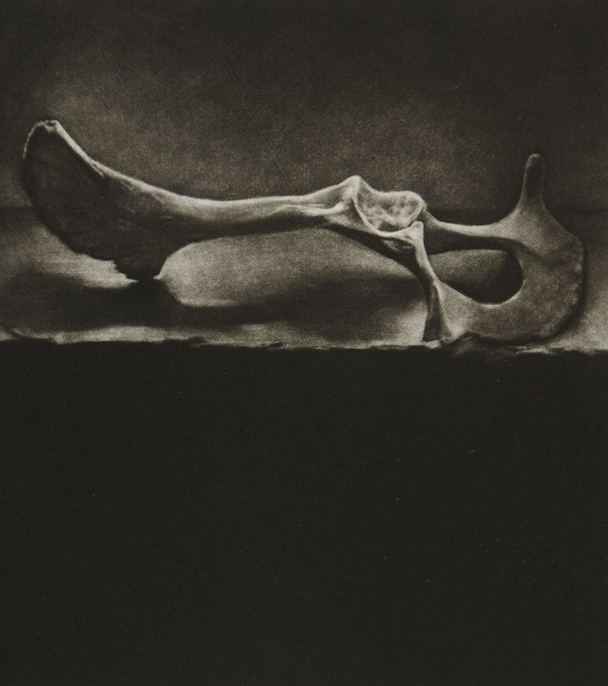'discarded object (calcium) i'  mezzotint | kate riley