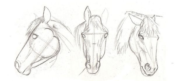 How To Draw Horse Step By Step For Kids