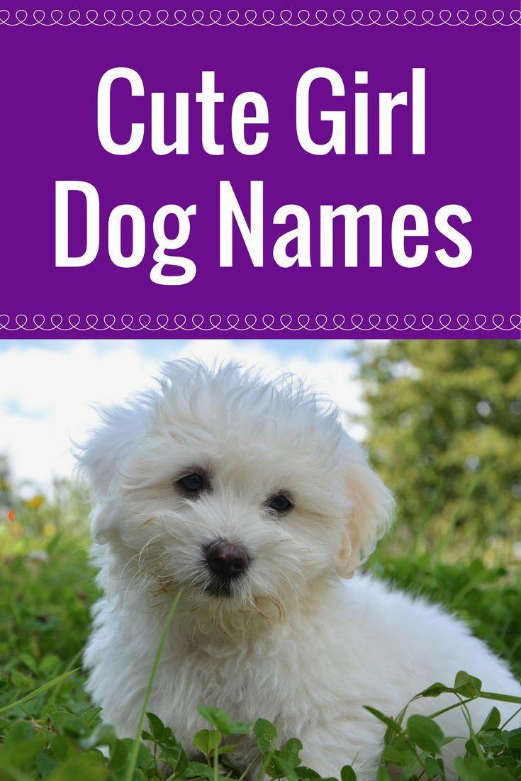 Names Girl dog names, Cute female dog names, Cute names
