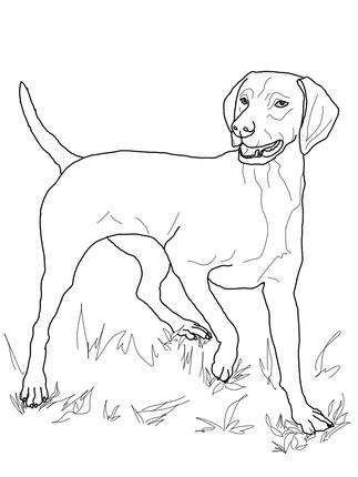 Click Vizsla Coloring Page For Printable Version