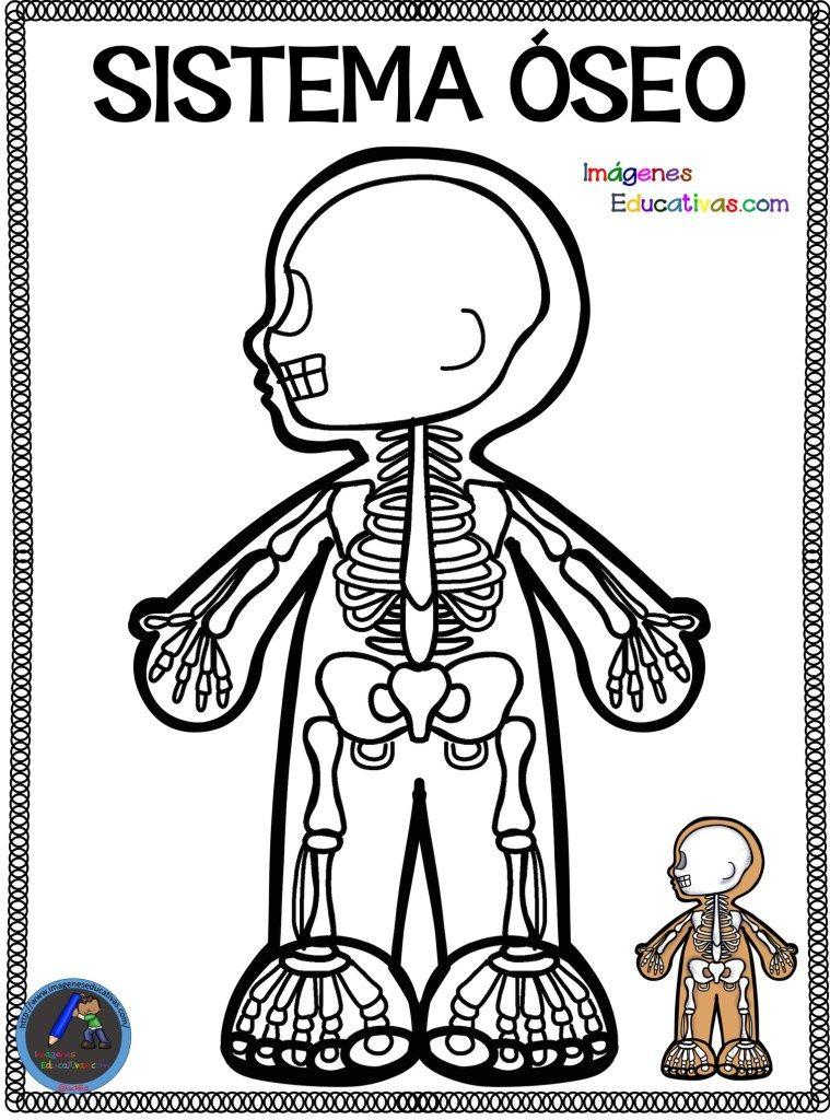 Cuaderno Para Colorear El Cuerpo Humano 9 Sistemas Del