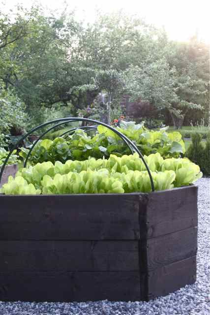 Walk In Garden Box: If The Ground Is To Hard To Dig; Use Planter Boxes, Old