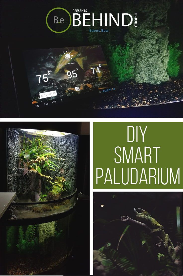 The complete guide to an autonomous diy paludarium terrarium