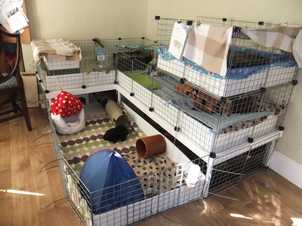 Unique home made guinea pig cages member gallery c c for Diy c c guinea pig cage